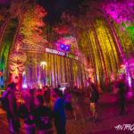 Electric Forest approved for 10-year extensionElectric Forest Credit Anthony Norkus